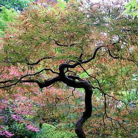 Athena Mckinzie - Japanese Tree in Springtime