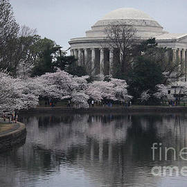 Luv Photography - Jefferson  Memorial