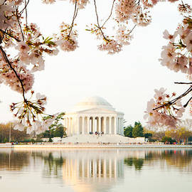 Susan  Schmitz - Jefferson Memorial With Reflection and Cherry Blossoms