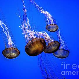 Norman Gabitzsch - Jellyfish Clique