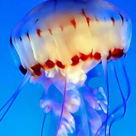 Dawn Eshelman - Jellyfish 3