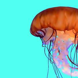 Tanias Reign  - Jellyfish
