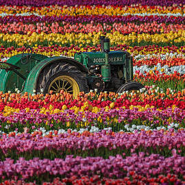 Wes and Dotty Weber - John Deere And A Few Tulips D5896