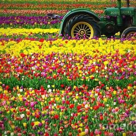 Susan Garren - John Deere Tulips