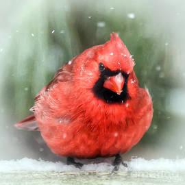 Kerri Farley - Jolly Old ....... Cardinal