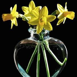 Angela Davies - Jonquil Spring