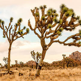 Bob and Nadine Johnston - Joshua Tree National Park 1