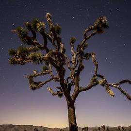 Lee Kirchhevel - Joshua Tree Night