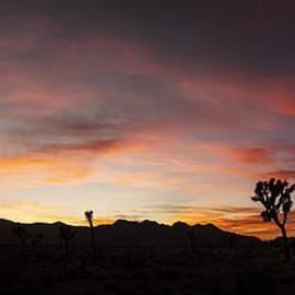 Lee Kirchhevel - Joshua Tree Sunset Panorama
