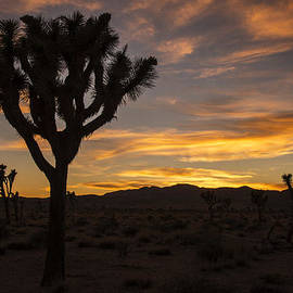 Lee Kirchhevel - Joshua Tree Sunset Silhouette 5