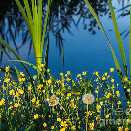 Ismo Raisanen - Joys of Summer