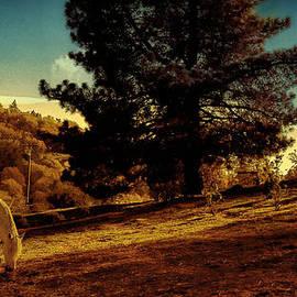 Douglas MooreZart - Springtime California Landscape