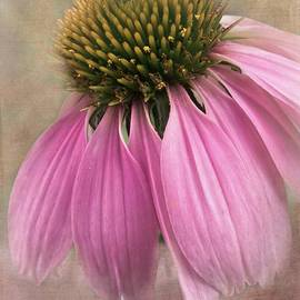 Melissa Bittinger - June Coneflower