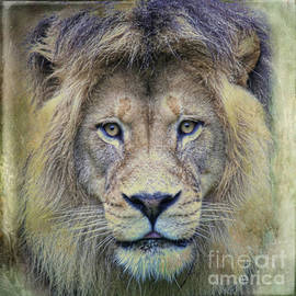 Steve McKinzie - Jungle King
