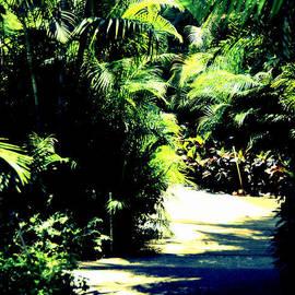 Sue Rosen - Jungles