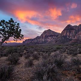 Bjorn Burton - Juniper Sunset