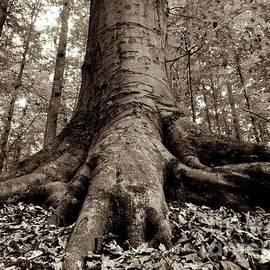 Sean Cupp - Jurassic Tree