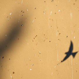 Jouko Lehto - Just a shadow. House martins. Sirmione. Lago di Garda
