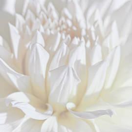 Jennie Marie Schell - Just a Whisper White Dahlia Flower