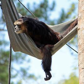 Cynthia Guinn - Just Hanging Around