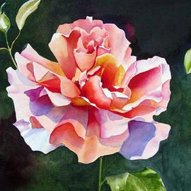 Pat Yager - Just Joey Rose Watercolor