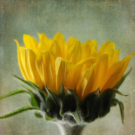 Denyse Duhaime - Just Opening Sunflower