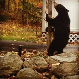 Steph Zemsky - Just Passing By To Find A Bear