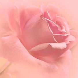 Jennie Marie Schell - Blush Pink Rose Flower