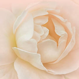 Jennie Marie Schell - Just Peachy Rose Flower