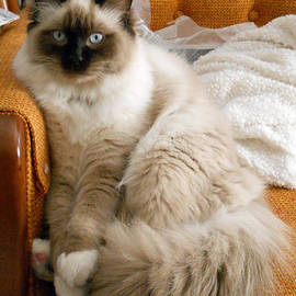 Nancy L Marshall - Just Sitting