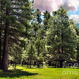Bob and Nadine Johnston - Kaibab National Forest Ponderosa Pine