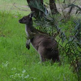Cheryl Miller - Kangaroo 1.1