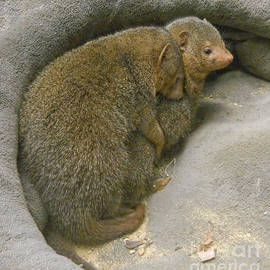 Emmy Marie Vickers - Keeping Warm - Dwarf Mongooses