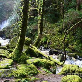 DejaVu Designs - Killarney National Park in Ireland