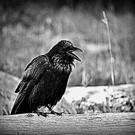 Lisa Holland-Gillem - King Raven Caws