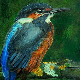 Janet Pancho Gupta - Kingfisher Drawing