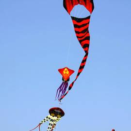 Christine Till - Kites over Baja California