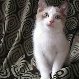 Pamela Benham - Kitten Chocolate and White