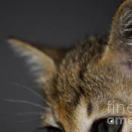 Nola Lee Kelsey - Kitten Eyes
