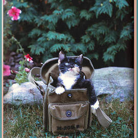 Patricia Keller - Kitten in a Canvas Bag