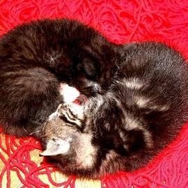 ConnieAnn LaPointe - Kitten Love