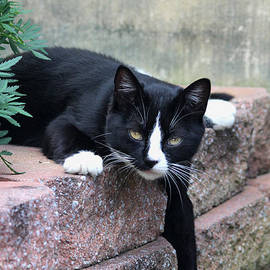 Trina  Ansel - Kitty