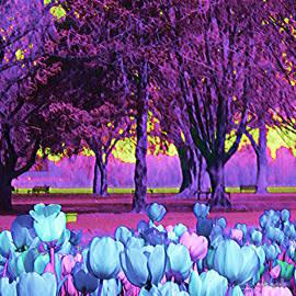 Ann Johndro-Collins - Kiwi Sky With Tulips