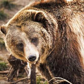 David Millenheft - Kodiak Bear