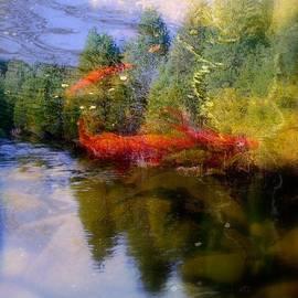 Rick Todaro - Koi Fish  Dream