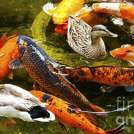 Jerry Cowart - Koi Fish in Pond Swimming With Two Mallard Ducks