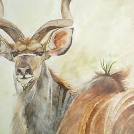 Andrick Jean - Kudu