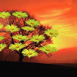 Barbelotta - Kunst der natur