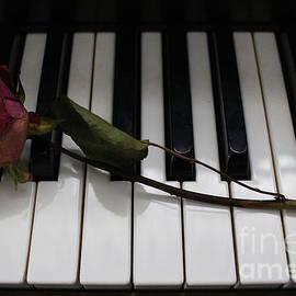 Photographic Art and Design by Dora Sofia Caputo - La Vie En Rose - A Love Song
