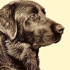 Jennie Marie Schell - Labrador Retriever Dog in Sepia